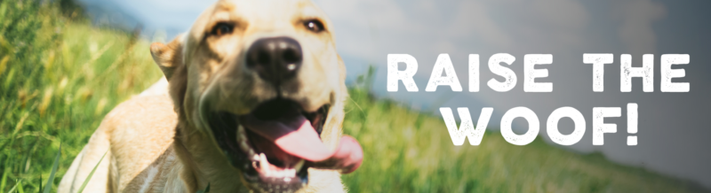 Deal of the Day: Save up to 35% on Outward Hound