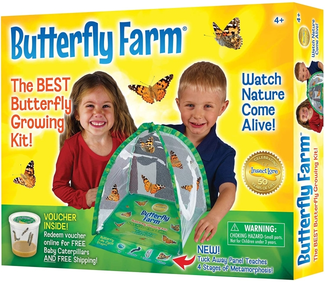Purchase Insect Lore Butterfly Farm, Green at Amazon.com