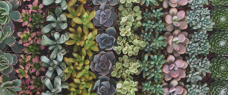 Deal of the Day: Save up to 30% on Succulents Live Plants